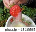 練乳 コンデンスミルク フルーツの写真 1316695