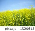 春いっぱい♪ 1320618