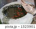金魚 1323901