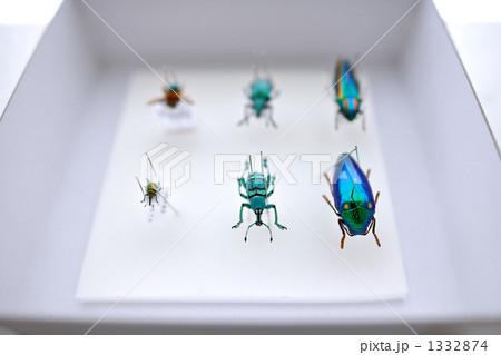 昆虫標本 1332874