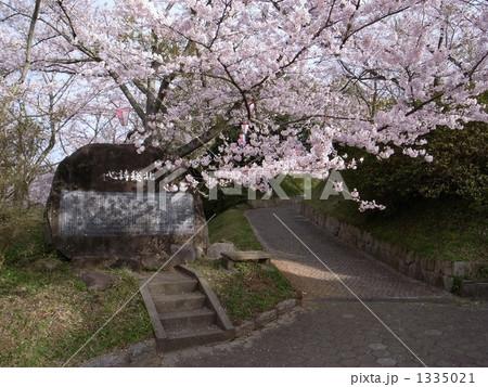 城山公園の桜 1335021