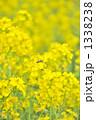 菜の花にとまるミツバチ 1338238