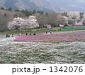 芝桜の里 1342076