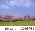 桜の広場 1346761