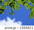 青空と若葉 1368821