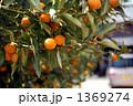 柚子の木 1369274