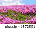 春のイメージ 野原 1372551