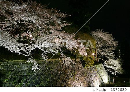 岩手公園の夜桜 1372829