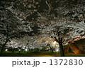 岩手公園の夜桜 1372830