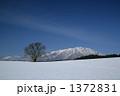 冬の小岩井農場の一本桜と岩手山 1372831