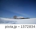 冬の小岩井農場の一本桜と岩手山 1372834