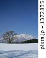 冬の小岩井農場の一本桜と岩手山 1372835