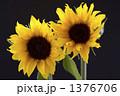 サンリッチオレンジ 花 向日葵の写真 1376706