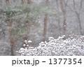 雪 1377354
