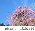しだれ梅の木 1380119