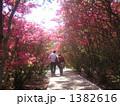 小室山公園 つつじトンネル 1382616