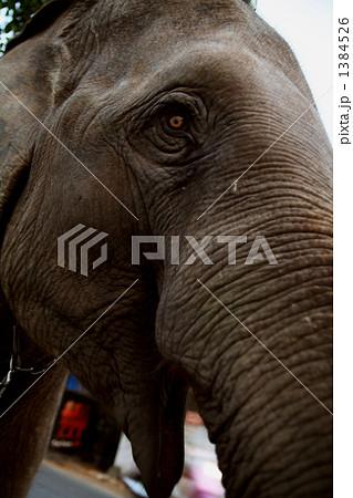 アジア象 1384526