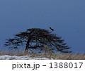 別海の一本松とオオワシ 1388017