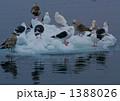 流氷のお船です 1388026