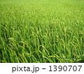 田んぼ 1390707