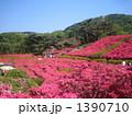 小室山公園 つつじ祭り 1390710