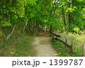 新鮮な空気 青葉のトンネル散歩道 1399787