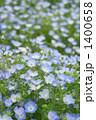 青い花 1400658
