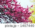 キクモモ (国立東京博物館) 1407440