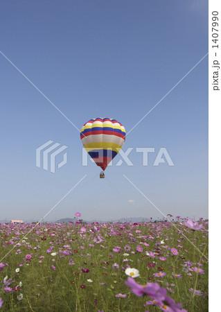 群馬県板倉町のコスモス祭り・コスモスと熱気球 1407990