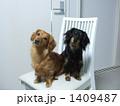 犬と住む暮らし 1409487