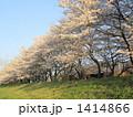 桜並木 1414866