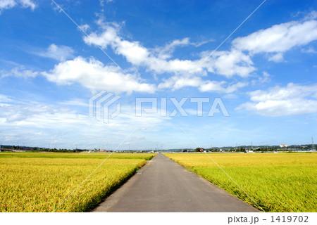 田んぼの中の道 1419702