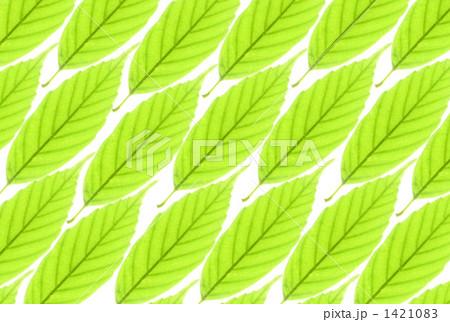 緑の葉の背景 1421083