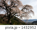 乙ヶ妻の枝垂れ桜 1432952