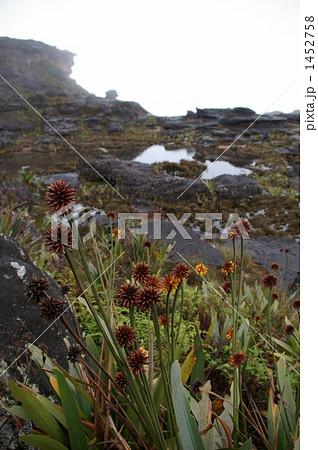 ロライマ山頂の景色 1452758