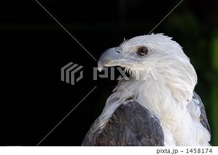 鷲の顔 1458174
