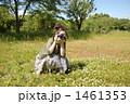 野原とカメラと女の子 1461353