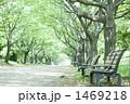 並木 ベンチ 新緑の写真 1469218