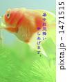 金魚 1471515