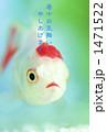 金魚 1471522