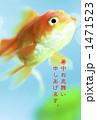 金魚 1471523