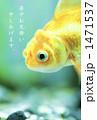 金魚 1471537