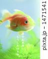 金魚 1471541