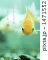 金魚 1471552
