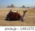ギザ 砂漠 ピラミッドの写真 1481375