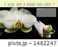 胡蝶蘭 1482247