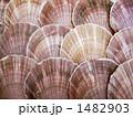 ホタテ 1482903