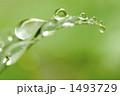 水玉 葉 草の写真 1493729