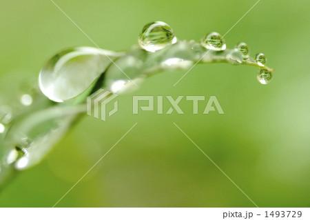 葉の水玉 1493729