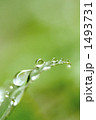 水玉 葉 草の写真 1493731